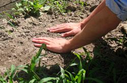 Ритуальное очищение землей